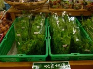野菜入荷1月末